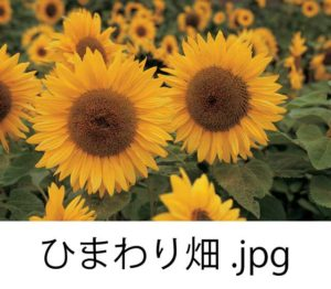 日本語名がついた画像ファイル